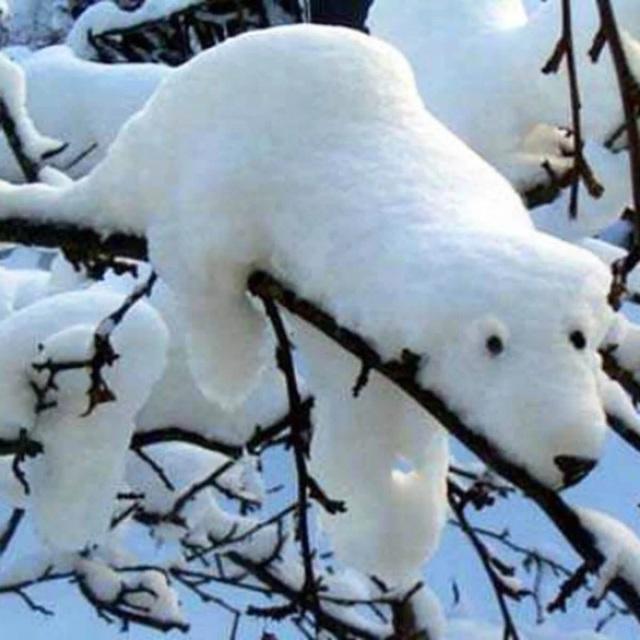 bear-in-tree
